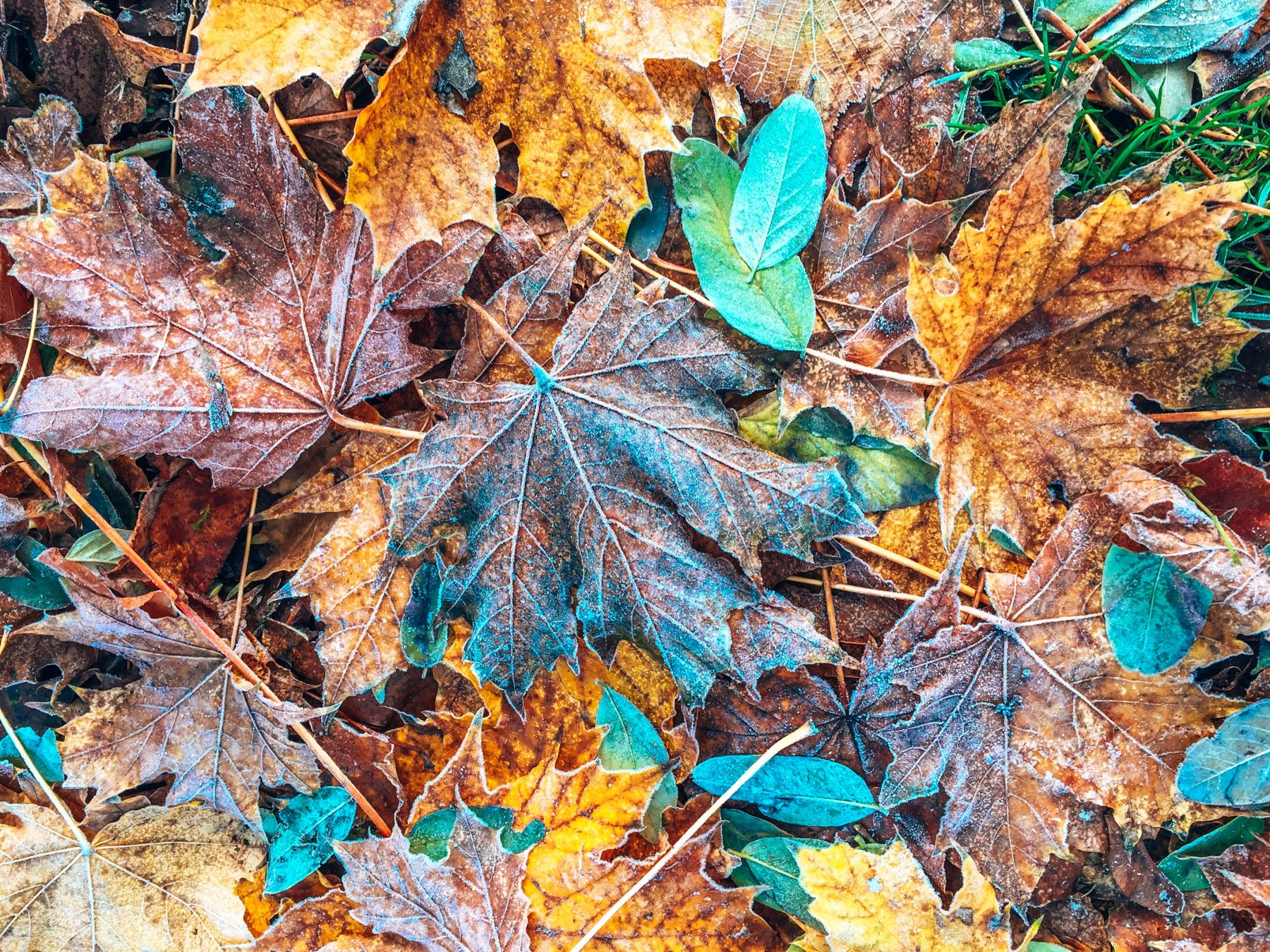 Winter getaways leaves