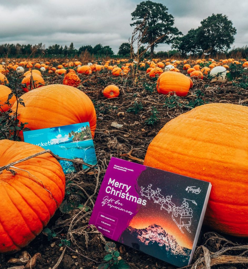 Tinggly pumpkin picking for gift experiences